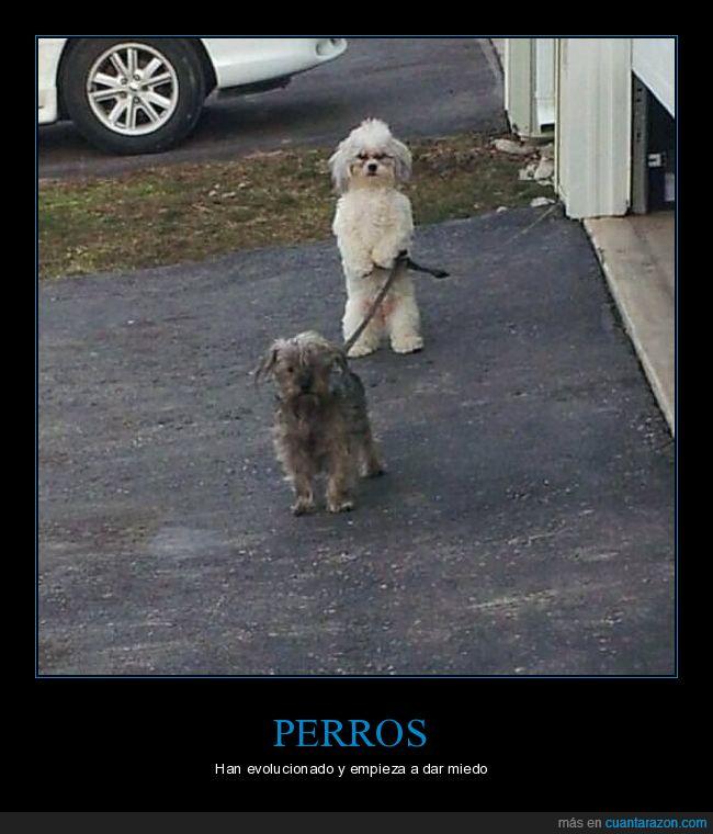 correa,pasear,perros