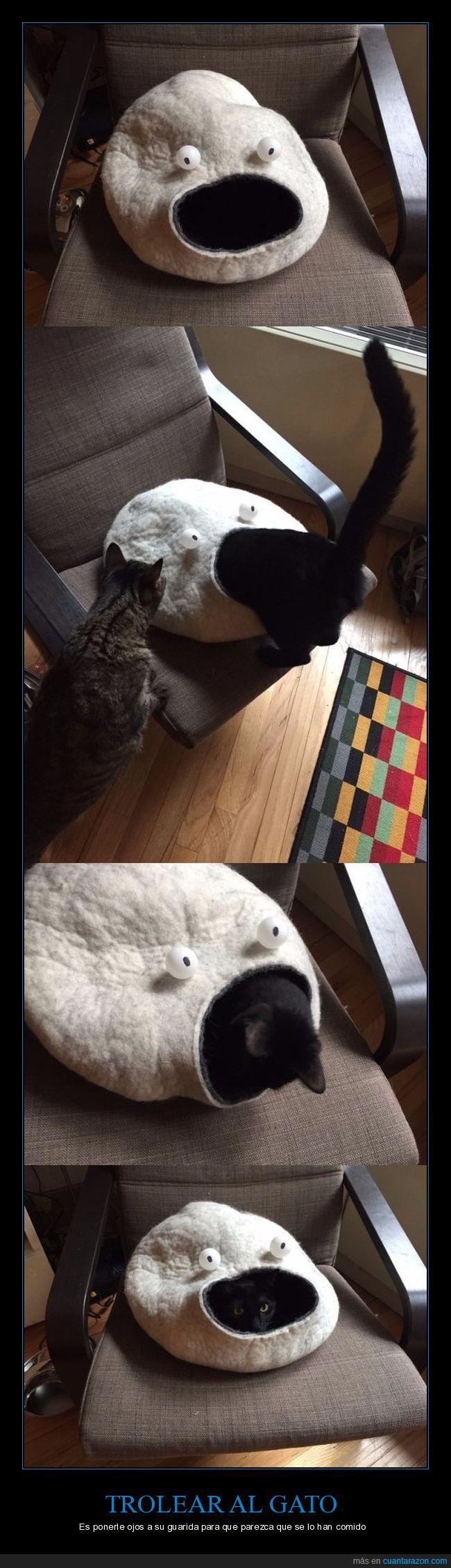 casita,cojín,gato,guarida