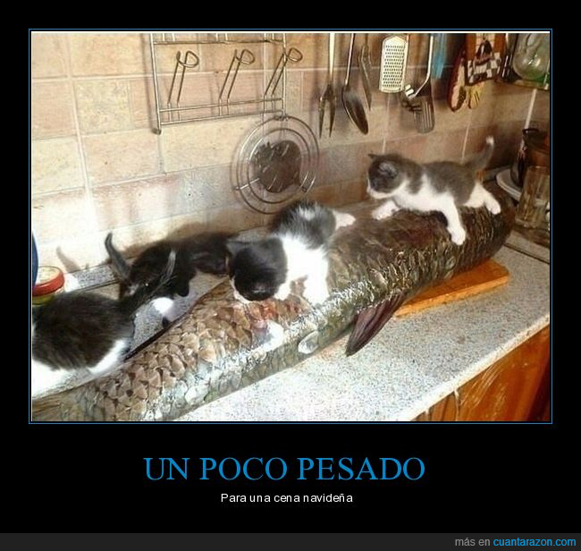 félidos,felinos,gatos,mininos,pescado