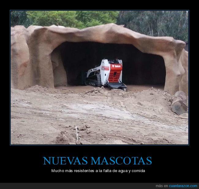 cueva,máquina,mascota,zoo