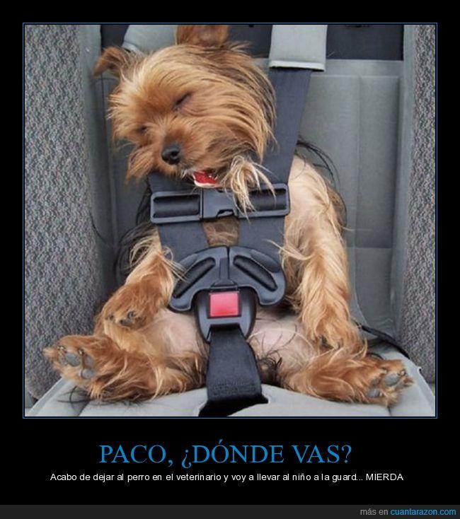 cinturón,coche,niño,perro,veterinario