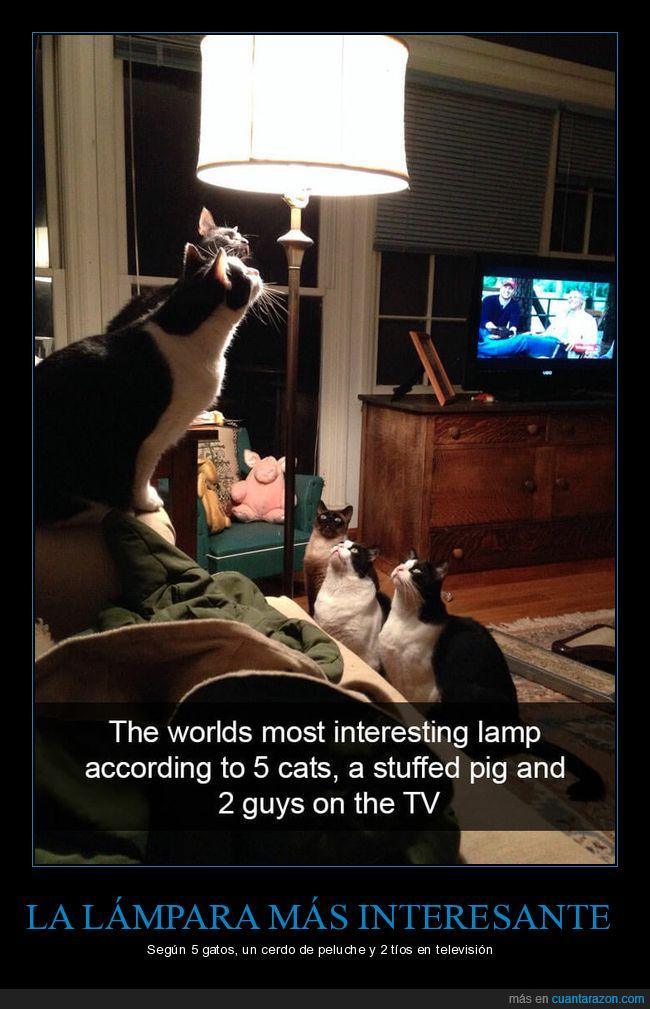 interesante,lámpara,tv