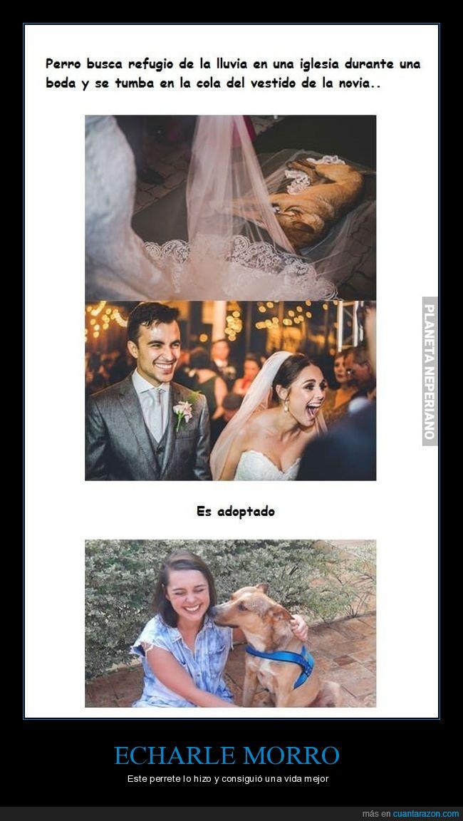 adopción,boda,iglesia,novia,perro,refugio