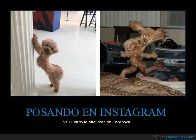 facebook,instagram,perro,posando