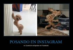 Enlace a Posando en instagram vs etiqueta en Facebook