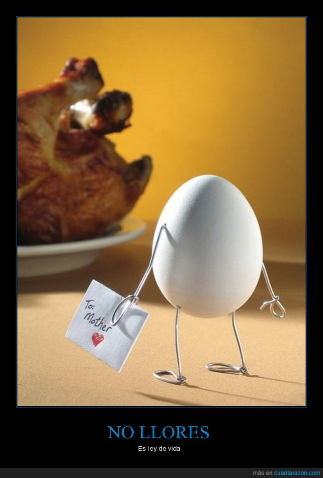carta,huevo,madre,pollo