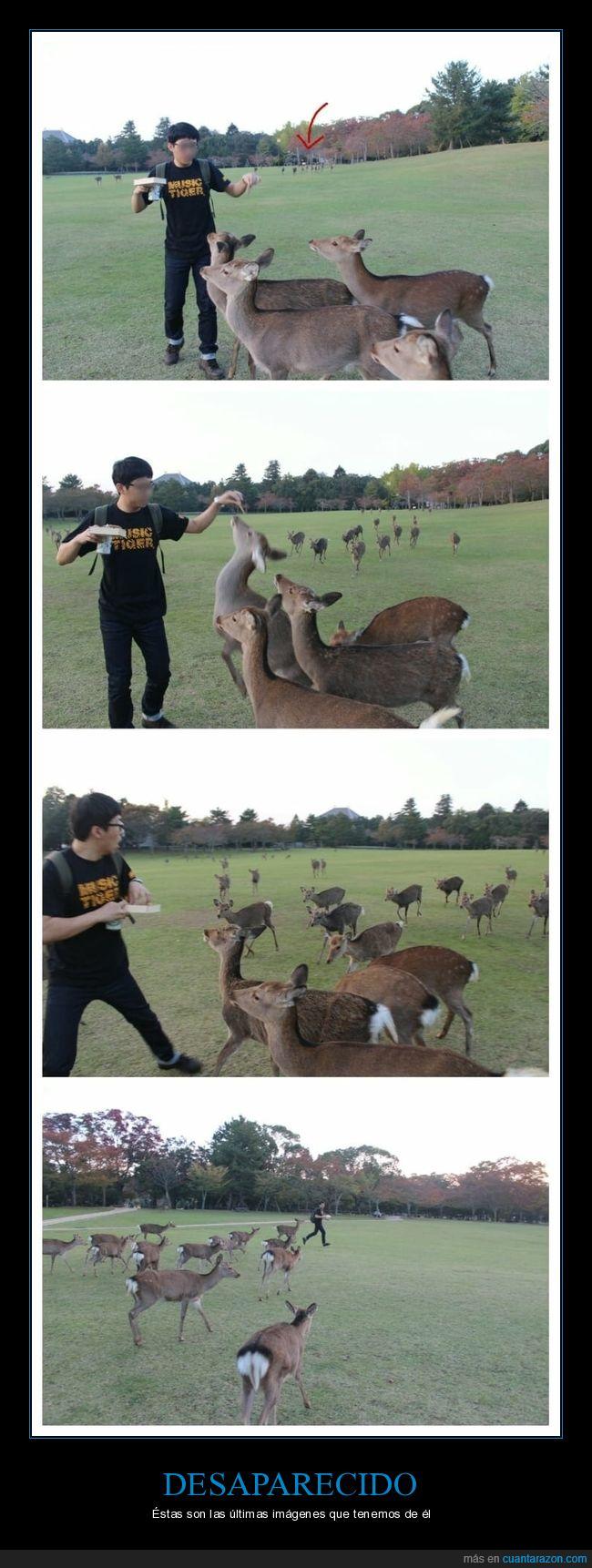 alimentar,ciervos,parque