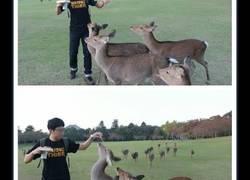 Enlace a La secuencia de imágenes de este chico alimentando a estos animalillos va a ponerte los pelos de punta