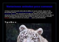 Enlace a Variaciones animales poco comunes