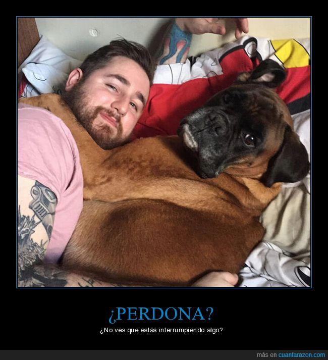 amor,cama,interrumpir,perro
