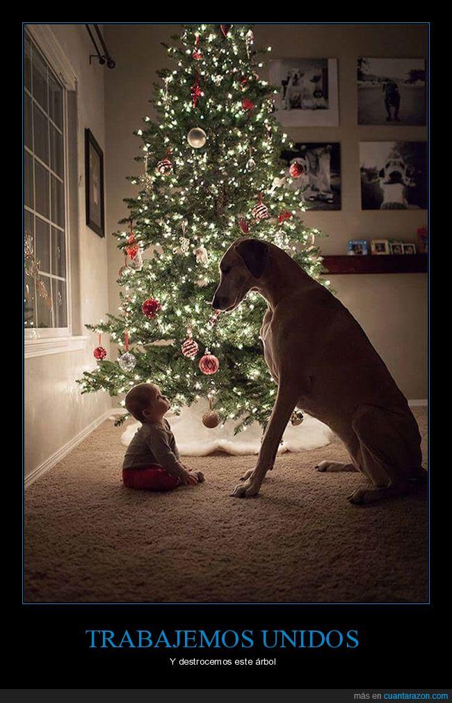 árbol,bebé,destrozar,navidad,perro