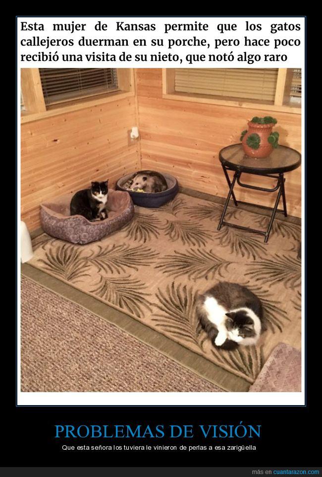abuela,gatos,zarigüella