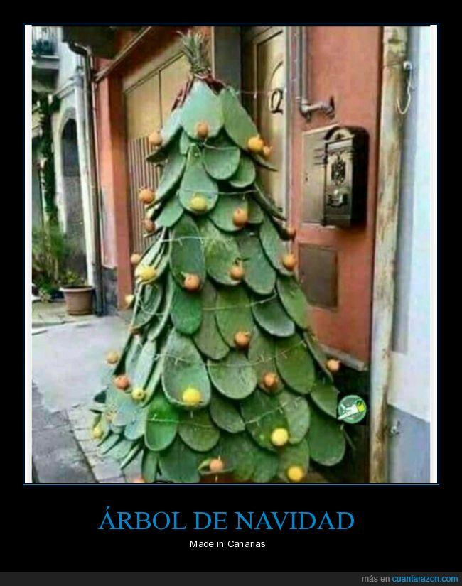 árbol,canarias,Navidad,Pino