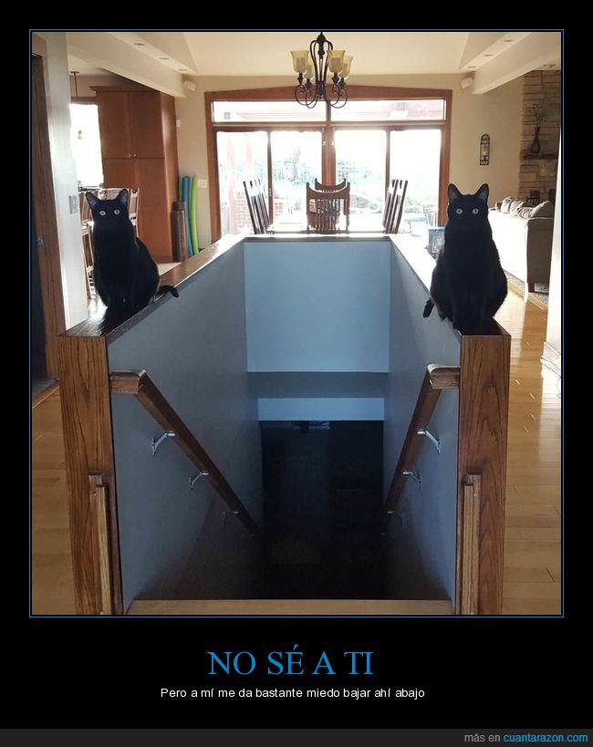 escaleras,gatsos,puerta
