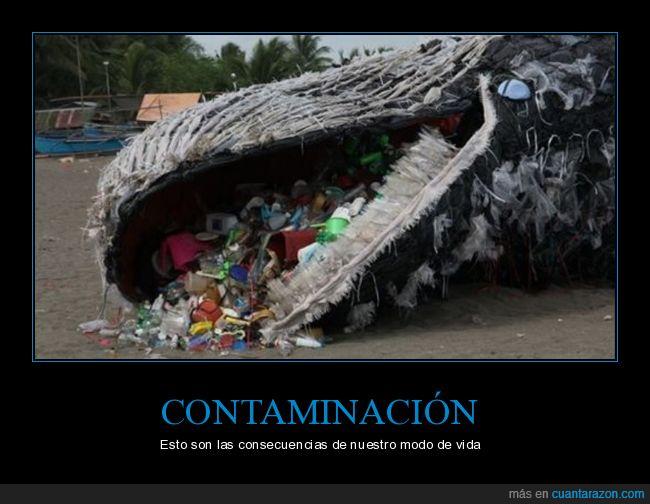 ballena,contaminación,muerta,plásticos