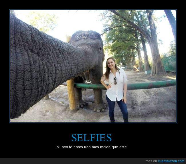elefante,selfie,trompa