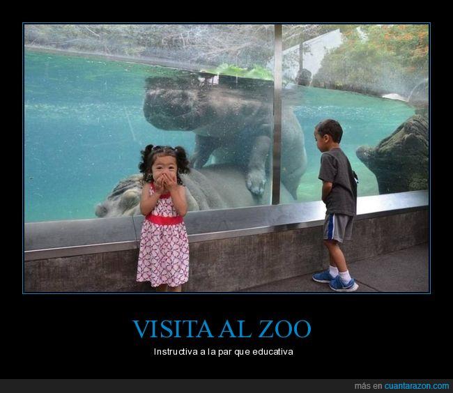 copulando,hipopótamos,niños,zoo