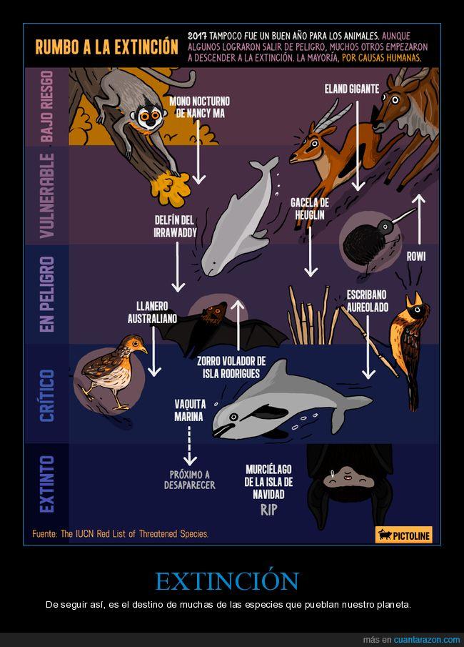 animales,especies,extinción