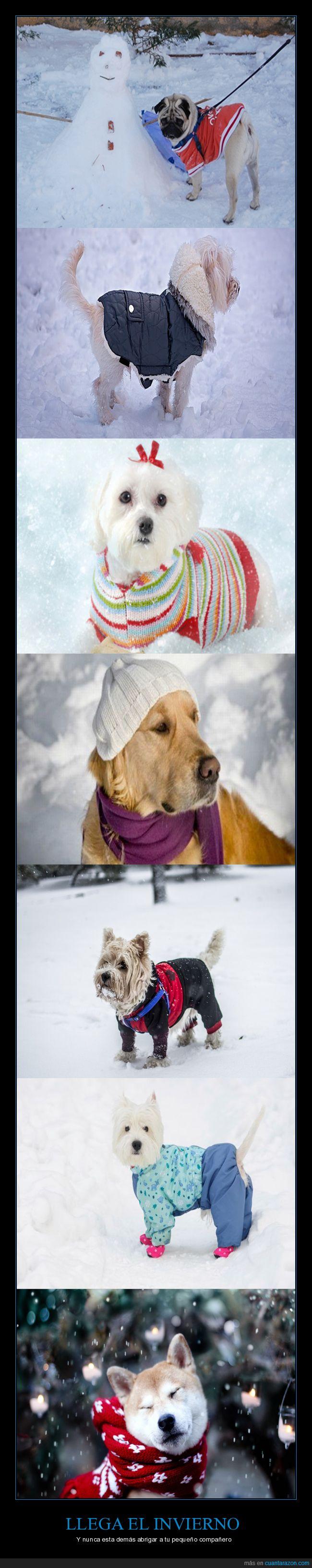 abrigados,invierno,perros