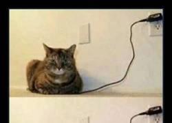 Enlace a Es fácil saber cuando tu gato ha terminado de cargarse