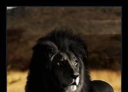 Enlace a Lamentablemente este majestuoso animal lleva más de 100 años extinto