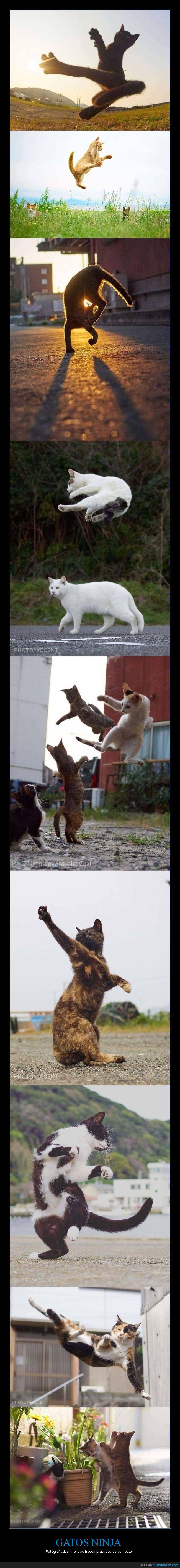 entrenando,gatos,ninja