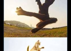 Enlace a Gatos ninja captados mientras practican sus técnicas de combate