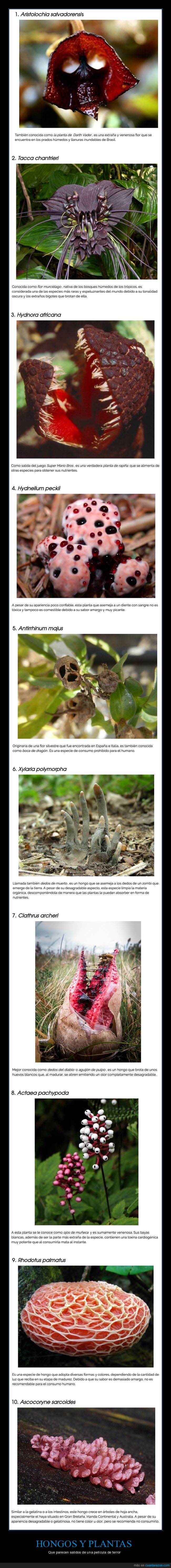 hongos,plantas,raros