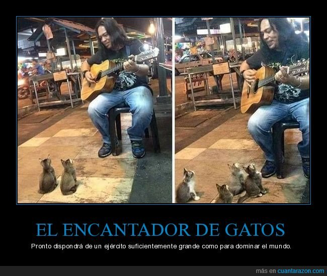 gatos,guitarra,tocando