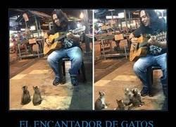 Enlace a El encantador de gatos está reuniendo a su ejército