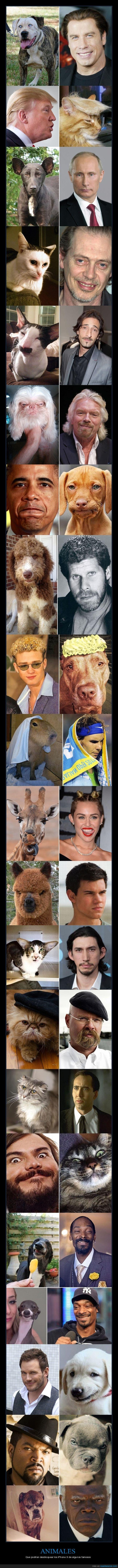 animales,famosos,parecidos
