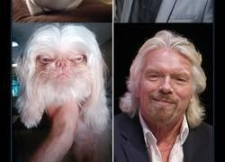 Enlace a Famosos que se parecen a animales. O viceversa...