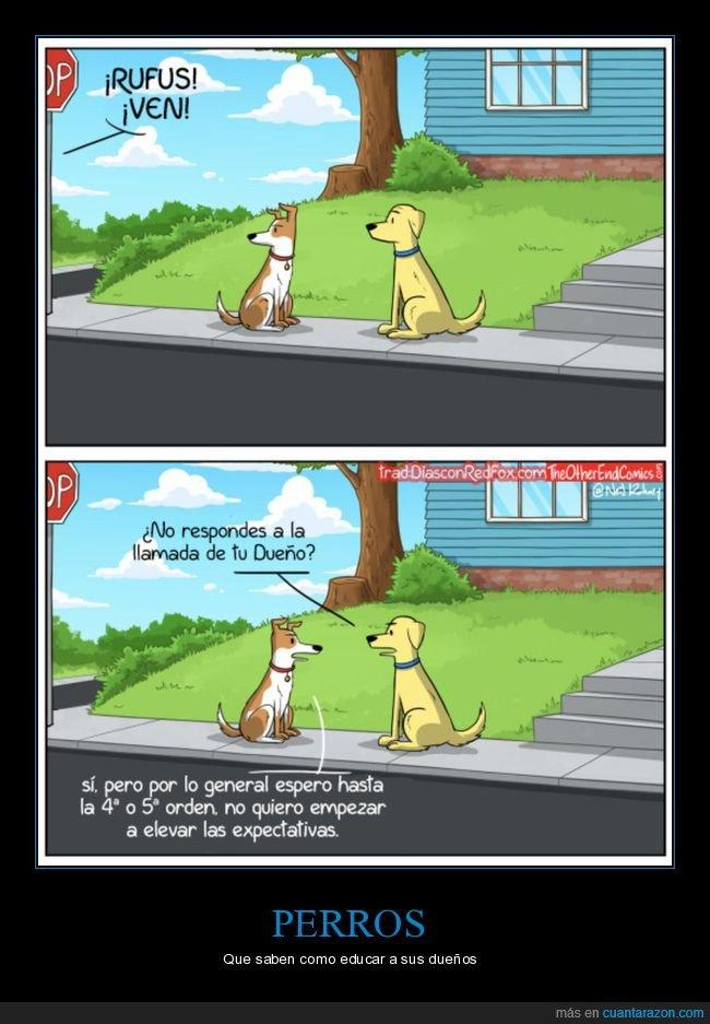 dueño,llamada,perros