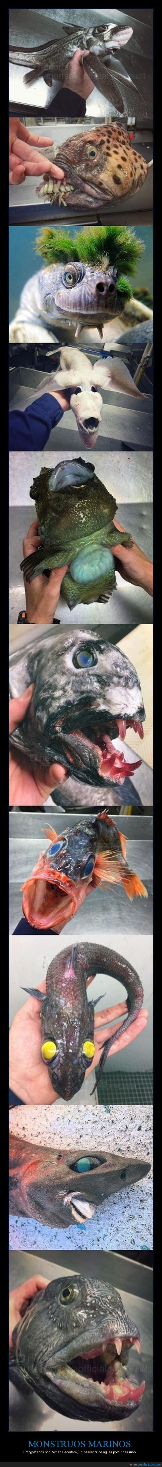 aguas profundas,monstruos marinos,peces,pescador
