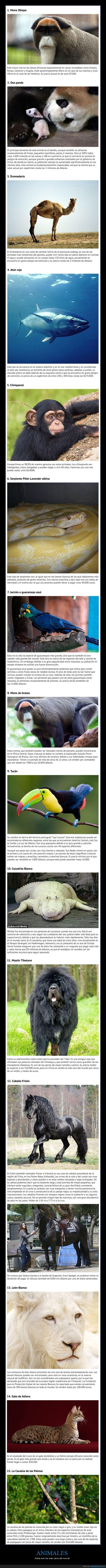 animales,caros,precio