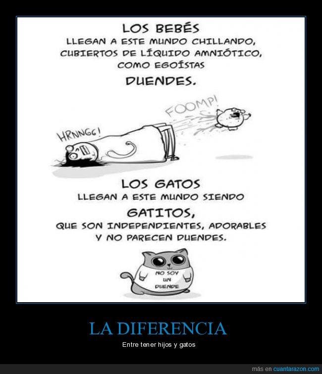 bebés,diferencias,gatos