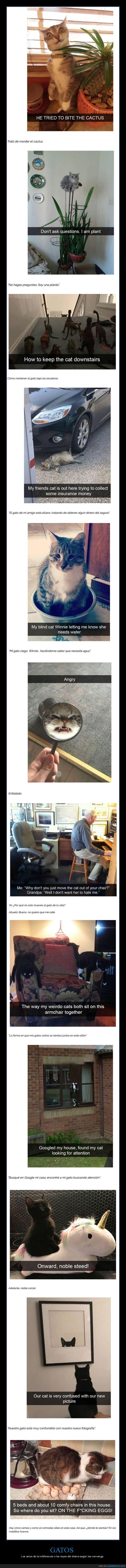 drama,gatos
