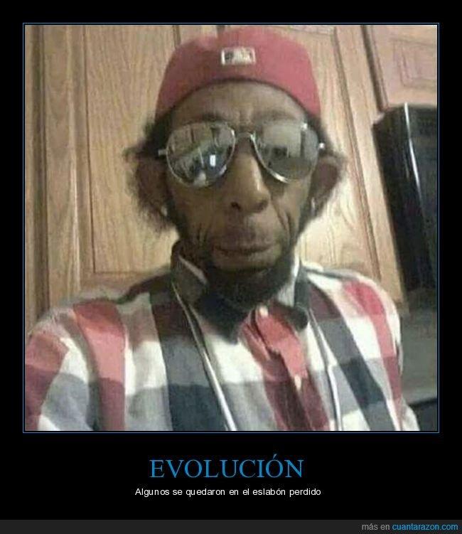 evolución,mono,parecidos