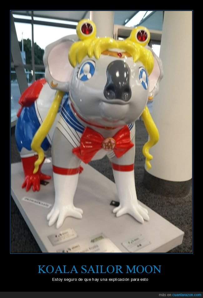 koala,sailor moon,wtf