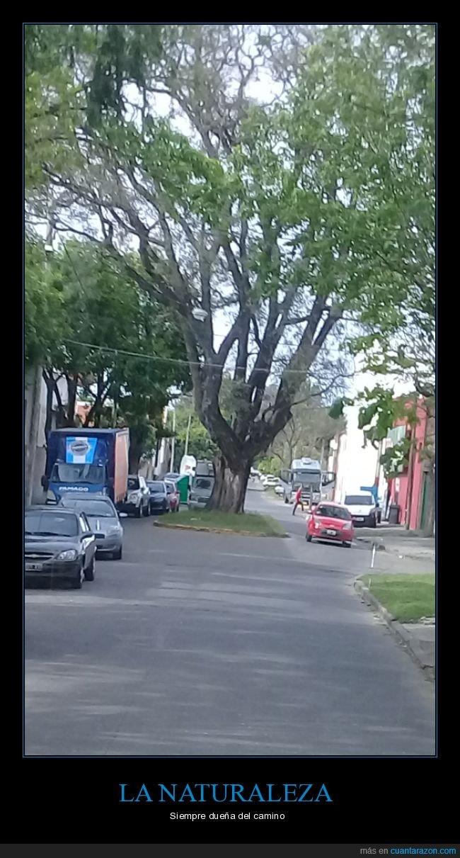 árbol,camino,carretera,naturaleza