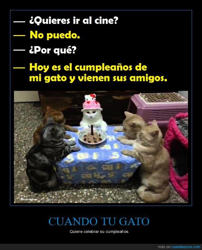 cumpleaños,excusa,gato