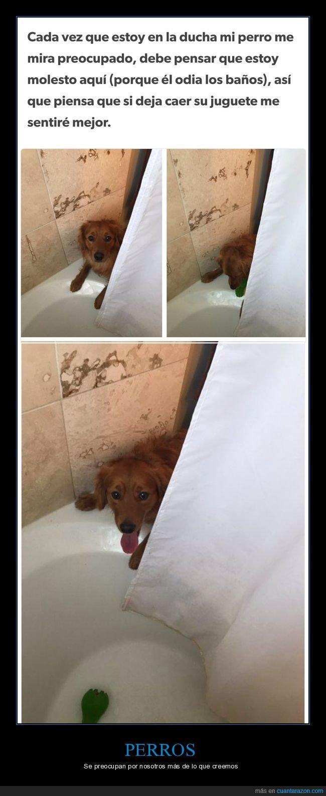 ducha,juguete,perro