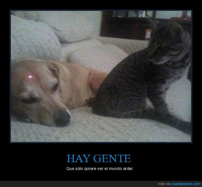 gato,perro,puntero láser