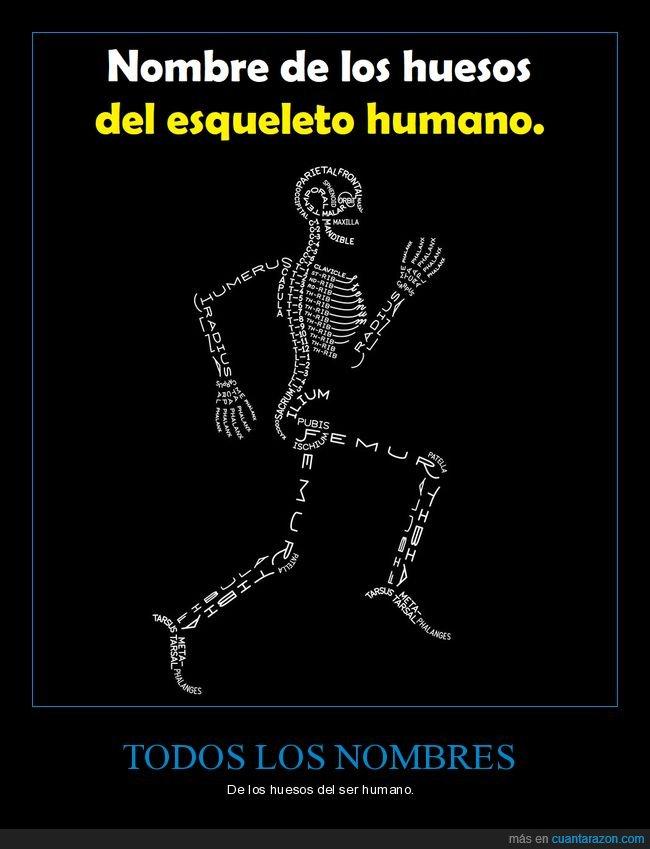 cuerpo humano,huesos,nombres