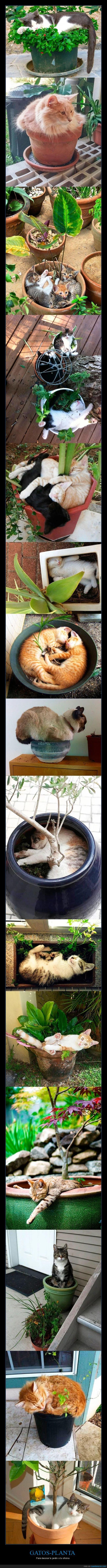 gatos,macetas,plantas