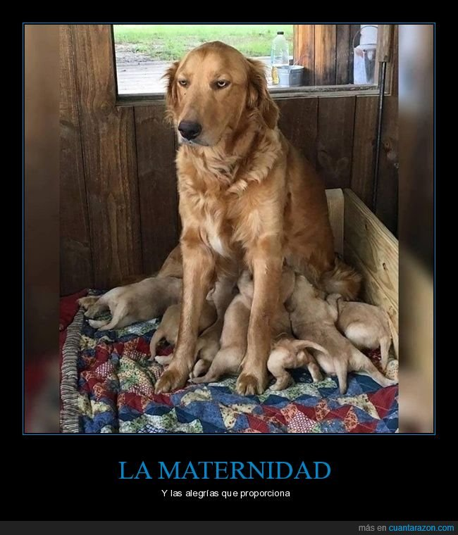 cachorros,cara,mamando,perra