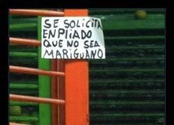 Enlace a Mariguanos no, por favor