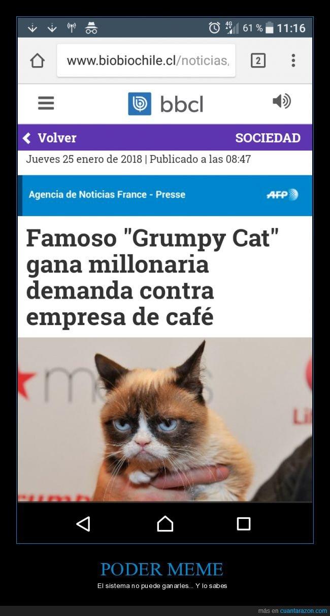 grumpy cat,juicio,Meme,memes al poder,no te metas con un meme,triunfo