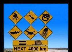Enlace a En Australia todo quiere matarte