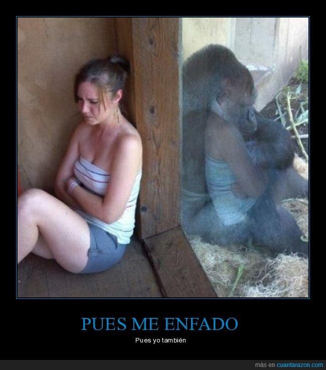 chica,enfadados,gorila,zoo